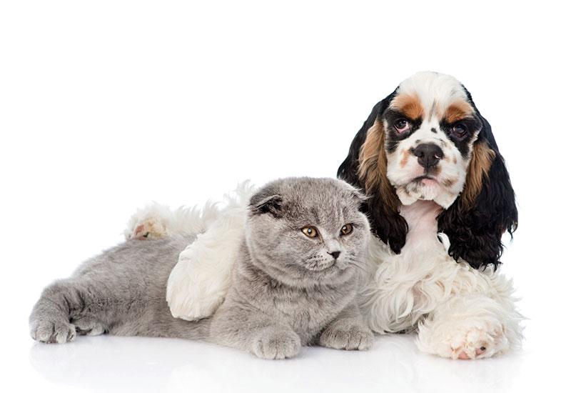 Mascotas, un sector en alza
